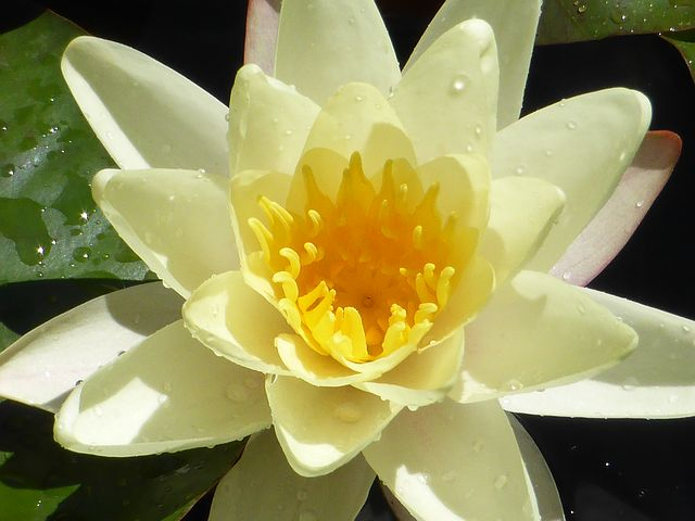 A lotus life missy e like the lotus flower rise above the muddy water of negativity but just as the muddy roots sustain the lotus flower let the realities of life enrich you mightylinksfo